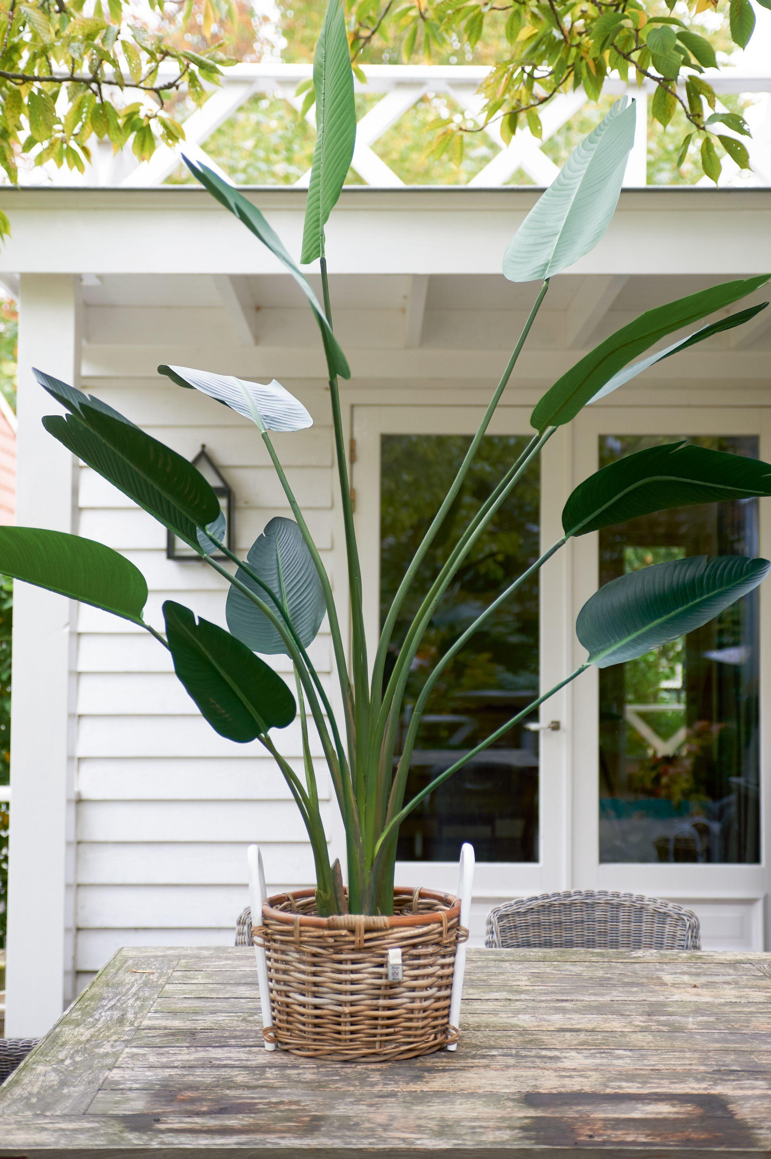 Umělá kytka Strelitzia Plant