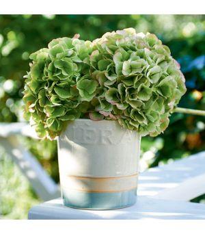 Kvetináč RM Classic Crackle Pot white