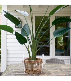 Dekorácia Strelitzia Plant 183x120