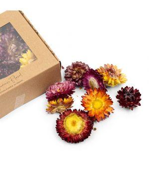 Sušené kvety Summer Floral Deco Purple