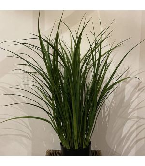 Plant Tall Grass